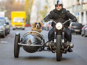 Sidecar for Penny :D | Motorcycles | Pinterest | Sidecar ...