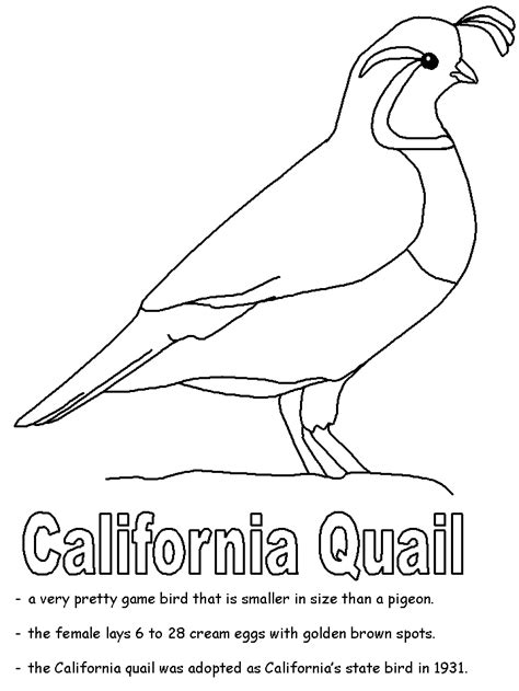 Coloring Quail by California Quail Coloring Page Coloring Home