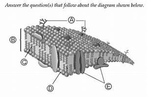 Print Chapter 17  Lipids Flashcards