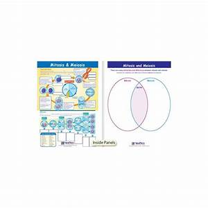 Mitosis  U0026 Meiosis Visual Learning Guide
