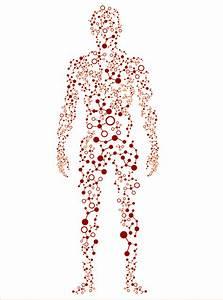 Revealing The Human Proteome