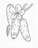 Coloring Cucumber Gurke Vegetables Pepino Colorear Vegetable Castraveti Sheets Vegetais Pepinos Zum Adult Ausmalbilder Gratis Ausmalen Fruits Drawing Imprimir Desenho sketch template