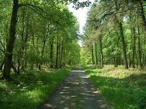 Comment Affuter Un Foret : voirie foresti re et biodiversit un guide pour une ~ Dailycaller-alerts.com Idées de Décoration