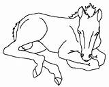 Horse Miniature Coloring Template Animal sketch template