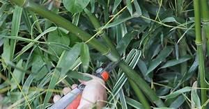 Bambus Zurückschneiden Frühjahr : bambus zur ckschneiden ~ Whattoseeinmadrid.com Haus und Dekorationen
