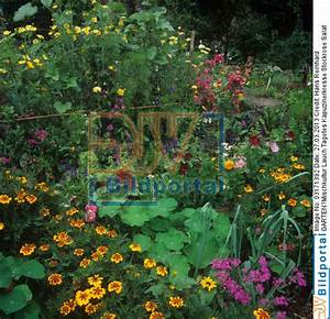 Mischkultur Im Garten : garten mischkultur ~ Orissabook.com Haus und Dekorationen