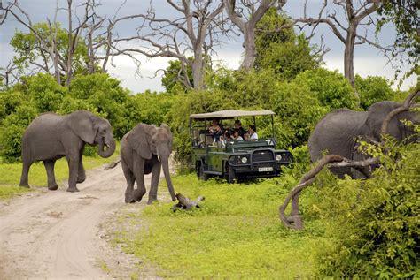 African Safari Travel Review