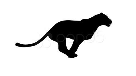 Looping Jaguar/panther/Leopard/puma Animation with ...