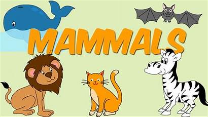 Mammals Mammal Examples Animals Species Learn Priority