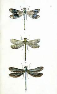 86 Best Audubon Prints  U0026 More Images On Pinterest