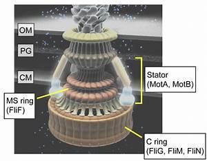 Diagram Universal Motor