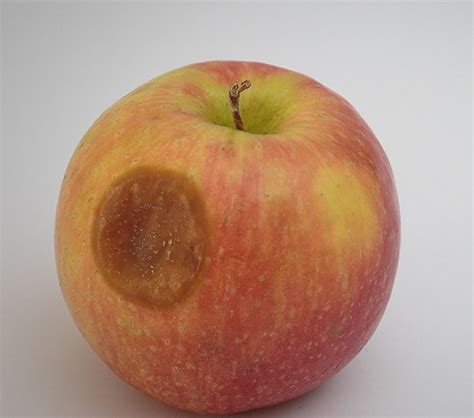 Apple no longer the world's most valuable brand - MSPoweruser