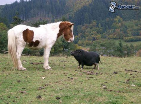 horse pig boar cart wild forest movie horses hathor animals neighbors fence neigh synchromiss decoded goes tag 4ever eu