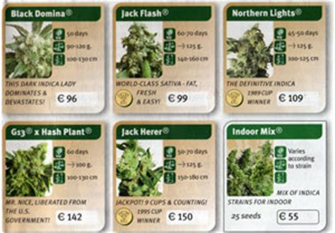 buying cannabis seeds in amsterdam amsterdam travel guide