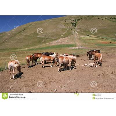 Horses In Castelluccio Di Norcia Stock Photo - Image: 25830090