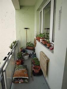 Hortensie Umpflanzen Im Topf : pflanzen selber ziehen anna fankhaenel produktdesign ~ Orissabook.com Haus und Dekorationen