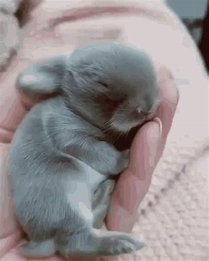 Rabbit Animals Gifs