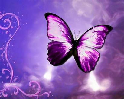 Butterfly Purple Backgrounds Desktop Wallpapers Animated Clipart
