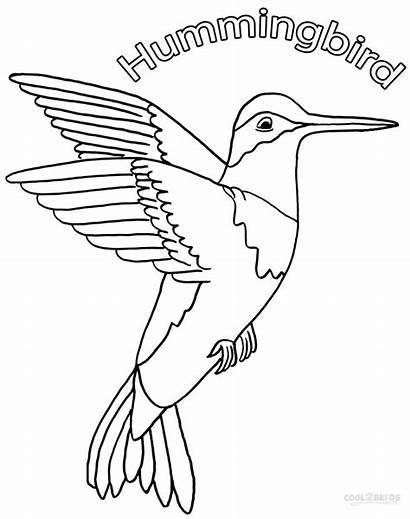 Hummingbird Coloring Hummingbirds Pages Printable Drawing Birds