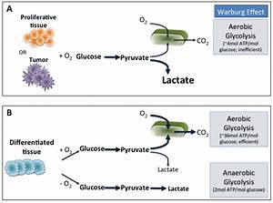 Schematics Of Oxidative Phosphorylation  Anaerobic