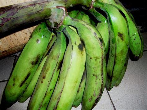 comment cuisiner les bananes plantain la banane plantain comment fertiliser et prevenir les