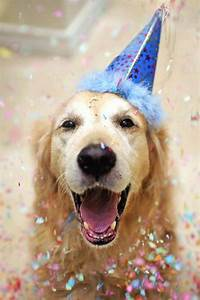 Best 25+ Happy birthday puppy ideas on Pinterest | Happy ...