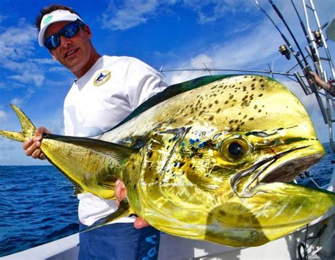 fishing podcasts shows fisherman occasional serious whether warrior weekend sports number re there