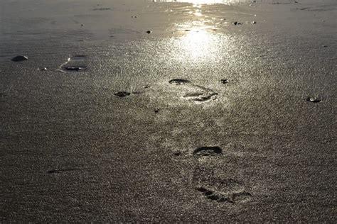 Revelations In A Walking Meditation