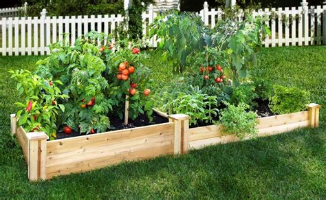 a raised bed for vegetables raised bed gardening starter guide