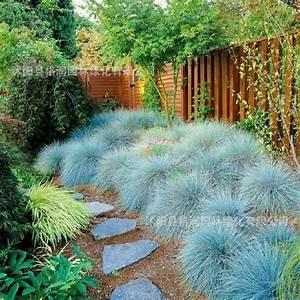 25+ best ideas about Fescue grass on Pinterest