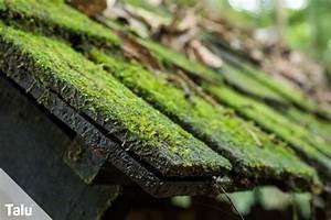 Moos Entfernen Dach : moos entfernen auf terrasse co anleitung hausmittel ~ Orissabook.com Haus und Dekorationen