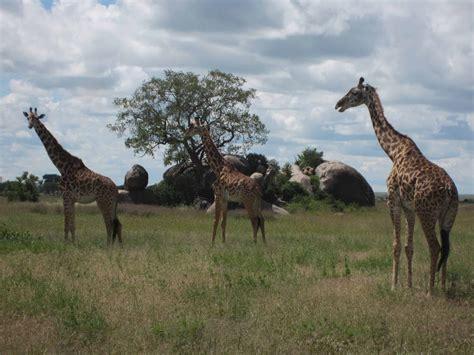 2-Day Ngorongoro Crater & Tarangire National Park ...