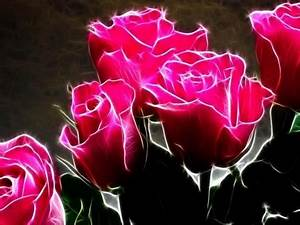 Neon Pink Roses - Flowers & Nature Background Wallpapers ...