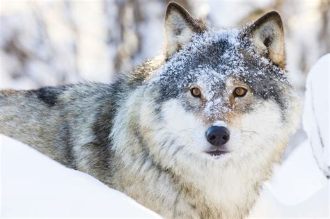 Wolf and Wildlife Sanctuary Colorado