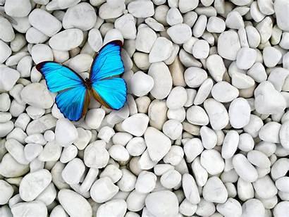 Butterfly Desktop Pixelstalk