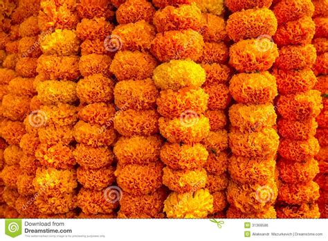 marigold garland marigold flowers garland background royalty free stock image image 31368586