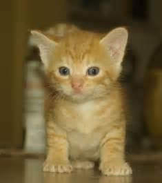 orange tabby cat names orange white cats gallery