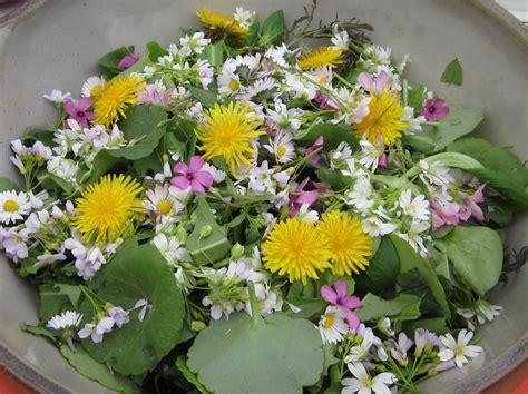 cuisine plantes sauvages comestibles photos rué plantes sauvages comestibles