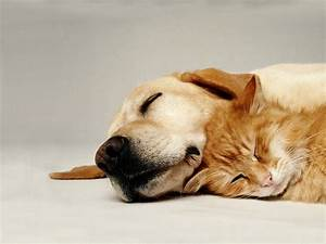 wallpaper cat and dog spooning