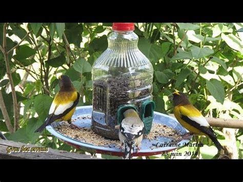 fabriquer une mangeoire d oiseaux rapidement