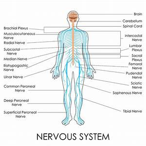 Neuropathic Drugs And Medications