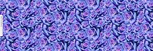 Dozens Of Beautiful Blue Roses Ask.fm Background - Floral ...