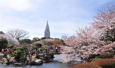 Here is sakura in a before picutre. 7 Spot Paling Populer Lihat Bunga Sakura di Jepang