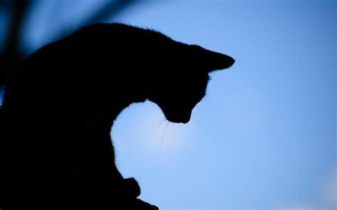 cat silhouette wallpaper gallery