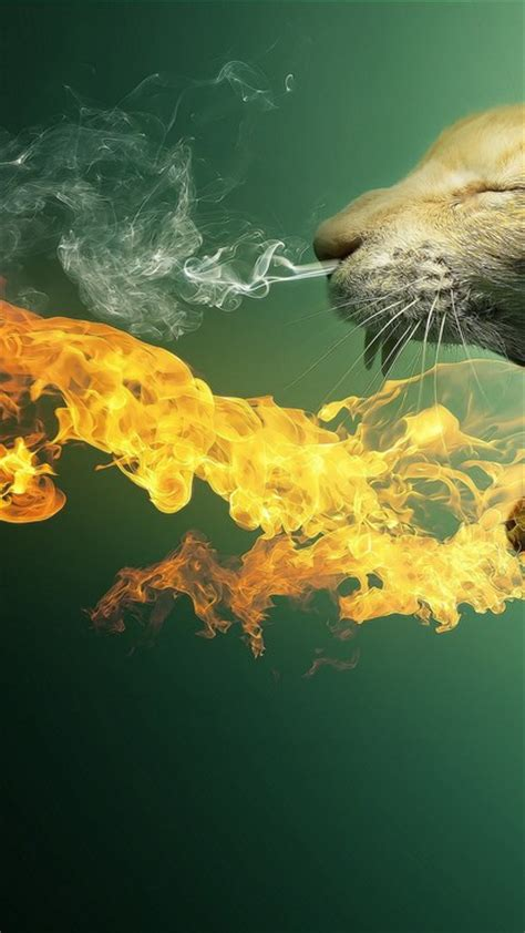 cats fire photo manipulation wallpaper allwallpaperin