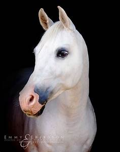 17 Best images about And Her Horse on Pinterest | Arabian ...