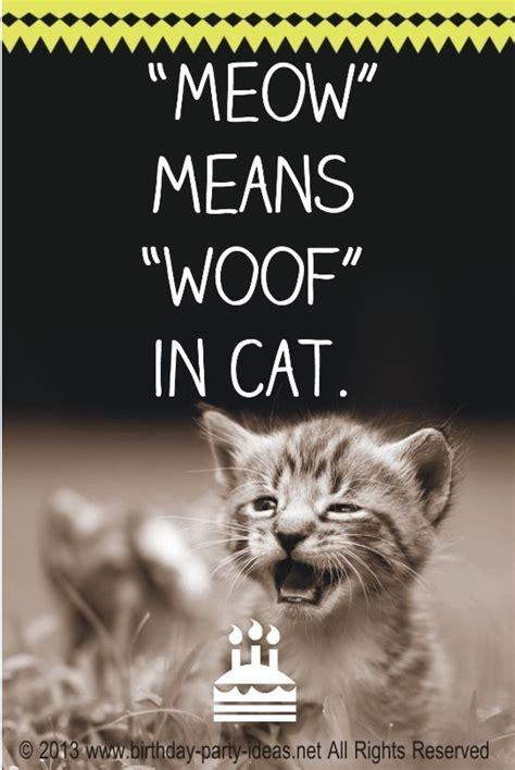 Cat Birthday Quotes. QuotesGram