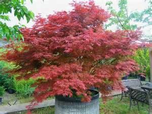 Arbuste Jardiniere by 25 Best Ideas About Petit Arbuste Sur Pinterest Arbuste