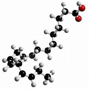 What Is Linolenic Acid