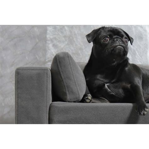 répulsif canapé produit repulsif canape 28 images canap 233 chien